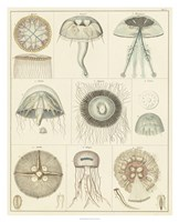 Jellyfish Display Fine Art Print