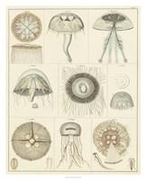 "Jellyfish Display by Oken - 26"" x 32"""