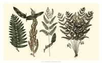 Fern Leaf Folio I Fine Art Print
