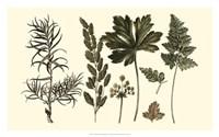 Fern Leaf Folio II Framed Print