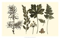 Fern Leaf Folio II Fine Art Print
