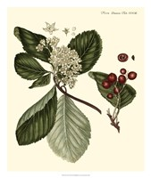 The Cherry Tree Fine Art Print