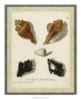 "Bookplate Shells I by Vision Studio - 18"" x 22"""