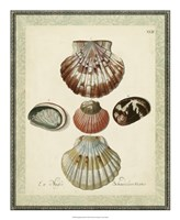 "Bookplate Shells III by Vision Studio - 18"" x 22"""