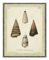 "Bookplate Shells VI by Vision Studio - 18"" x 22"""