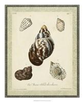 "Bookplate Shells VII by Vision Studio - 18"" x 22"""