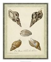 "Bookplate Shells VIII by Vision Studio - 18"" x 22"""