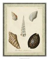 Bookplate Shells IX Fine Art Print