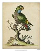 "Paradise Parrots I by George Edwards - 18"" x 22"""