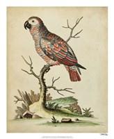 Paradise Parrots IV Fine Art Print