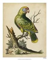 "Paradise Parrots V by George Edwards - 18"" x 22"""