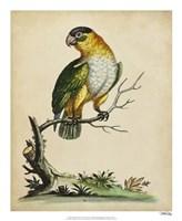 """Paradise Parrots VI by George Edwards - 18"""" x 22"""""""