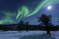 Aurora Borealis, Forramarka, Troms, Norway Fine Art Print
