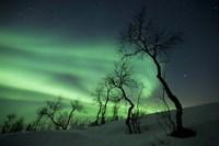 Northern Lights in the arctic wilderness, Nordland, Norway Fine Art Print