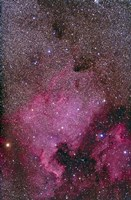 NGC 7000 and the Pelican Nebula by Alan Dyer - various sizes