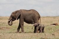 African Elephant With Baby, Maasai Mara Game Reserve, Kenya Fine Art Print