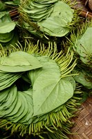Betel Leaves (Piper Betle) Used to Make Quids For Sale at Market, Myanmar by Jay Sturdevant - various sizes