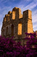 Ancient Roman Amphitheater with flowers, El Jem, Tunisia by Bill Bachmann - various sizes