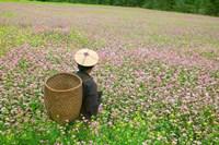 Farmer in Farmland of Canola and Buckwheat, Bumthang, Bhutan Fine Art Print
