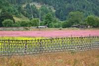 Farmland of Canola and Buckwheat, Bumthang, Bhutan Fine Art Print