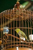 Hong Kong, Bird Garden, Market, Caged pet birds by Cindy Miller Hopkins - various sizes