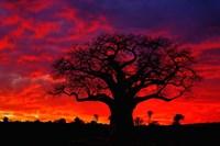 African baobab tree, Tarangire National Park, Tanzania Fine Art Print
