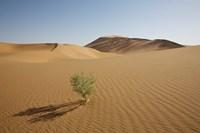 China, Gansu Province. Lone plant casts shadow on Badain Jaran Desert. by Jaynes Gallery - various sizes