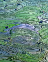 Flooded Tiger's Mouth Terraces, Yuanyang, Yunnan, China Fine Art Print