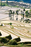 Flooded Ai Cun Rice Terraces, Yuanyang County, Yunnan Province, China Fine Art Print