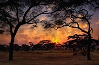 Acacia forest, sunset, Tarangire National Park, Tanzania Fine Art Print