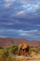 African Elephant Samburu Game Reserve Kenya