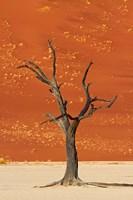 Dead tree, sand dunes, Deadvlei, Namib-Naukluft National Park, Namibia by David Wall - various sizes