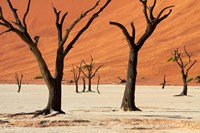 Dead trees with sand dunes, Namibia by David Wall - various sizes