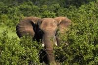 Elephant, Hwange National Park, Zimbabwe, Africa by David Wall - various sizes