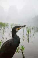 Cormorant by the Li River, China by Keren Su - various sizes