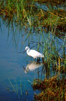 Botswana, Okavango Delta. Egret wildlife by Cindy Miller Hopkins - various sizes