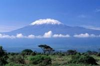 Africa, Tanzania, Mt Kilimanjaro, landscape and zebra Framed Print