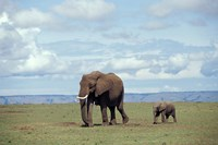 African baby elephant with mother, Masai Mara Game Reserve, Kenya by Adam Jones - various sizes