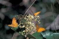 Butterflies, Gombe National Park, Tanzania Fine Art Print