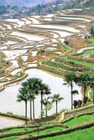 Asia, China, Yunnan Province, Jiayin. Flooded Terraces Fine Art Print