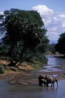 Elephant Herd Along Uaso Nyiro River, Samburu National Reserve, Kenya by Paul Souders - various sizes