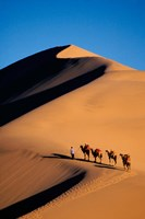 Camel Caravan with Sand Dune, Silk Road, China Fine Art Print