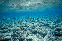Crystal Clear Waters and Sea Life of the Red Sea, Egypt Fine Art Print
