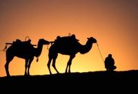 Camel Caravan Silhouette at Dawn, Silk Road, China by Keren Su - various sizes