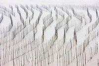 Agriculture, Bamboo sticks, drying seaweed, Xiapu, China Fine Art Print