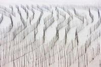 Agriculture, Bamboo sticks, drying seaweed, Xiapu, China Fine Art Print