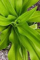 Close-up shot of dewdrops plant, Ibo Island, Morocco by Alida Latham - various sizes