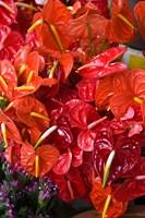 Flower Market Port Louis Mauritius