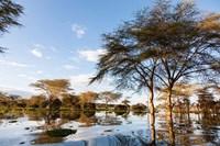 Flooded shoreline, Lake Naivasha, Crescent Island Game Park, Kenya by Martin Zwick - various sizes - $45.99