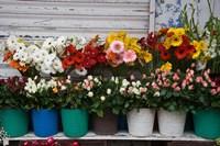 Flower Market, Port Louis, Mauritius by Walter Bibikow - various sizes